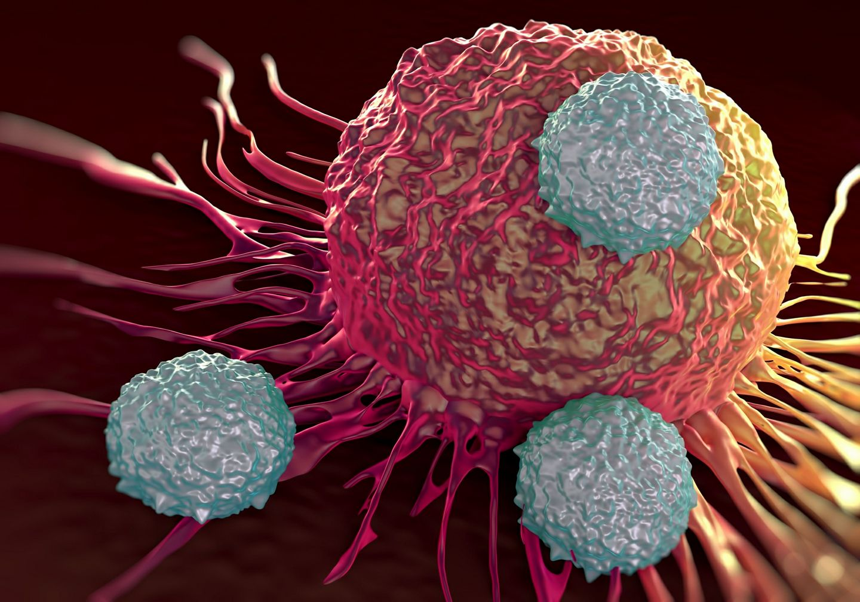 เซลล์มะเร็ง แอนติบอดี้ ยาต้านมะเร็ง