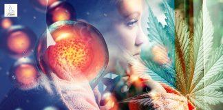 สเต็มเซลล์ และ กัญชา รักษาโรคมะเร็ง