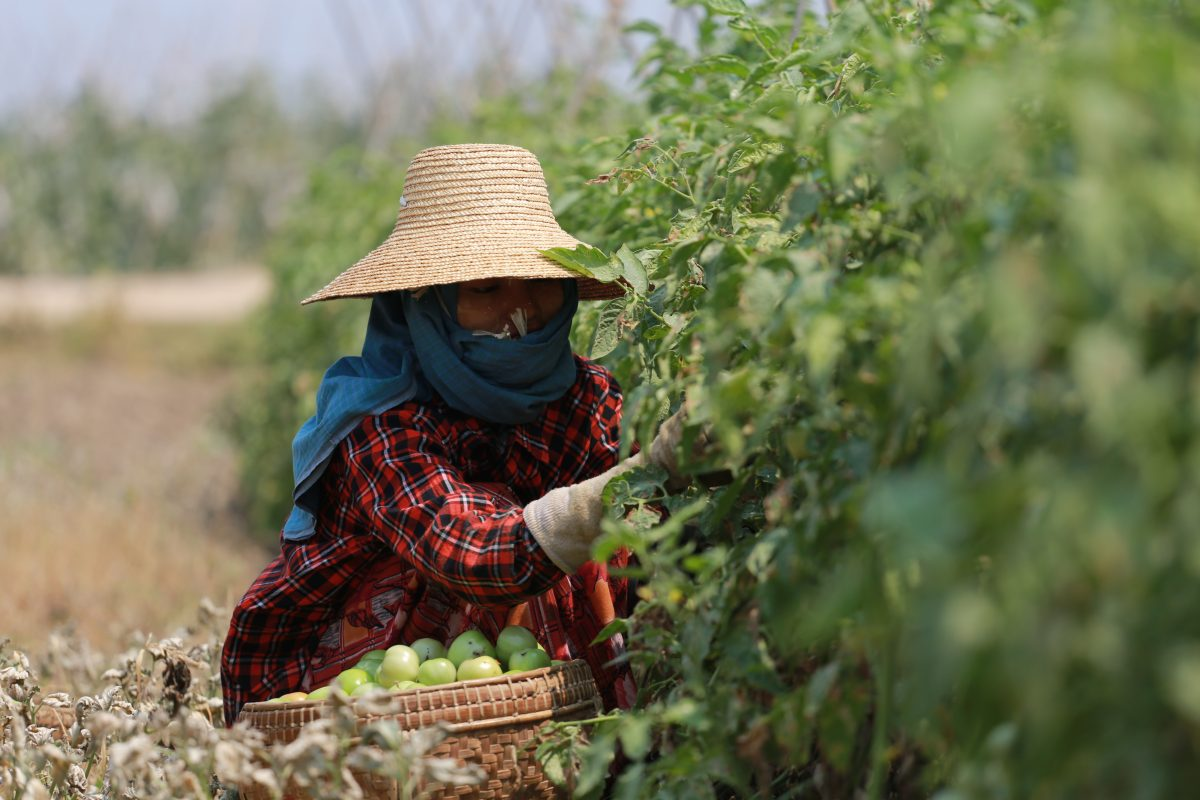 RBF Thailand_agriculture