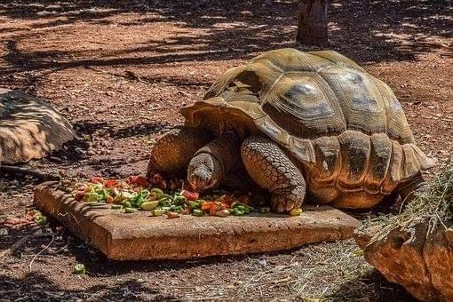 เต่า การใช้ชีวิต