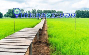 ชุมชน เกาะกก-บ้านฉาง