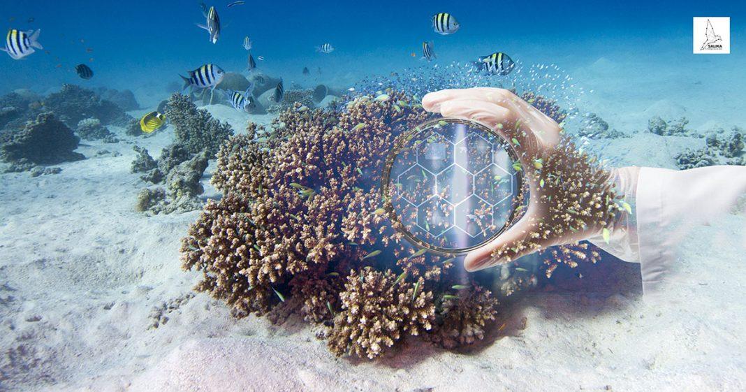 ปะการังไทย