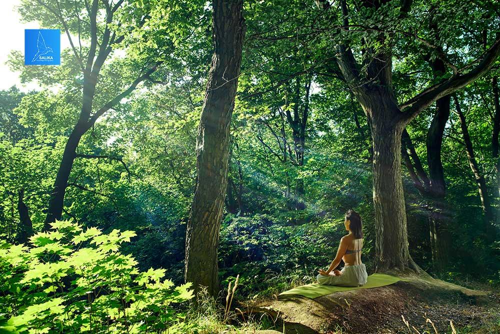 Forest Bathing หอบรักมาห่มป่า - salika